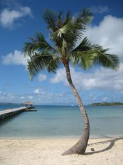 Palm Tree on Bora Bora