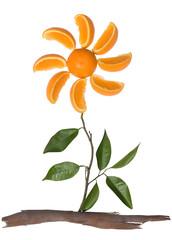 Orange Flower Concept
