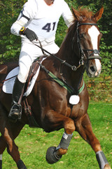 horse and rider following eventing track