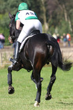 horse and rider following eventing track poster