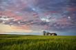 Summer Evening on the Prairie