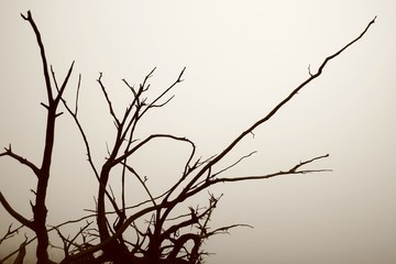 Roots of disproved tree and morning mist