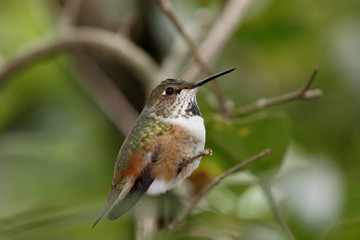 HUMMINGBIRD OF FLORIDA USA