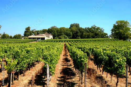 Spoed canvasdoek 2cm dik Wijngaard vigne près de bordeaux