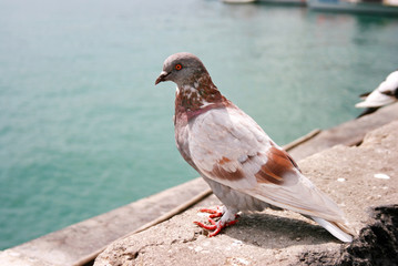 Brown and white city dove
