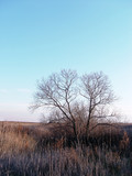bare tree in the field poster