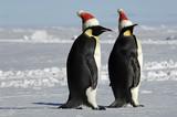 Fototapety Penguin couple on Christmas