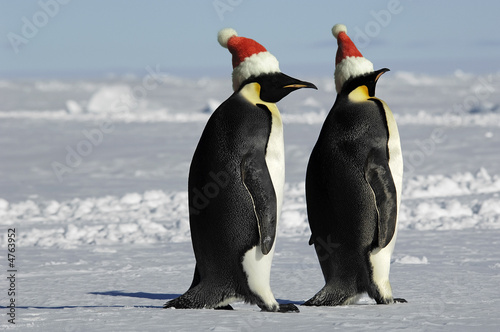 Deurstickers Pinguin Penguin couple on Christmas