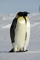Antarctic couple