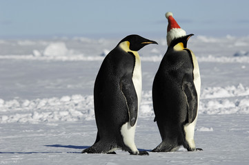 Penguin pair at Xmas