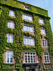Ivy covered building 01