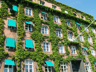 Ivy covered building 02