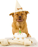 Dog Happy Birthday poster