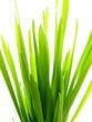 green grass straw