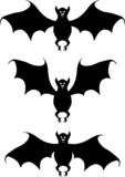 Bat. A vector illustration. A contour. White background. poster