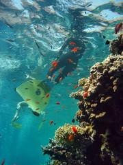 Riff mit Freitaucher
