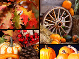 Thanksgiving Harvest Collection poster