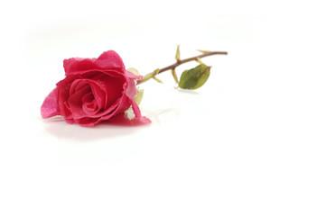 pink/red rose (5)