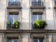 Fenêtres avec plantes vertes, Paris
