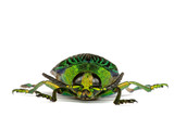 Jewel Beetle poster