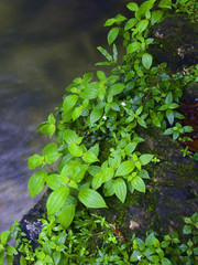 Stream and plant