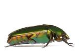 Tropical Rainforest Beetle poster