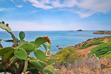 Cactus and sea
