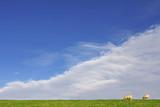 dutch sheep grazing in green fields poster