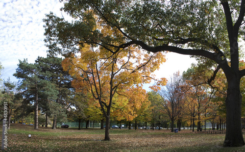 Golden Autumn in High Park 5