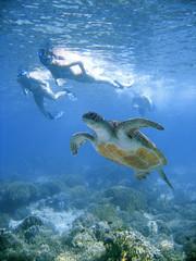 Bikini swim with sea turtle