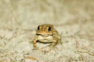 small frog on soil