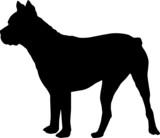 Animali silhouette - cani - Mastino poster