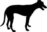 Animali silhouette - cani - Levriero poster