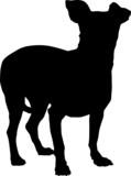 Animali silhouette - cani - Chihuahua poster