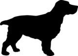 Animali silhouette - cani - Cocker poster