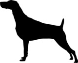 Animali silhouette - cani - Setter poster
