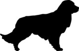 Animali silhouette - cani - Labrador poster