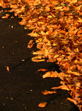 Autumn Leaves on Black Asphalt
