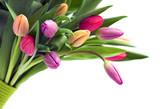 Fototapeta na białym tle - bukiet - Kwiat