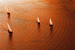 Sailing regatta in warm tones. The top view