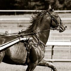 Le cheval carré