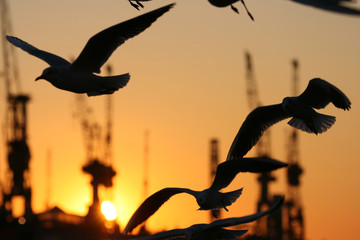 Sonnenuntergang am Hafen XI
