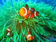 Leinwanddruck Bild - Nemo found