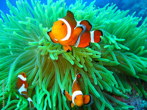canvas print motiv - Tommy Schultz : Nemo found
