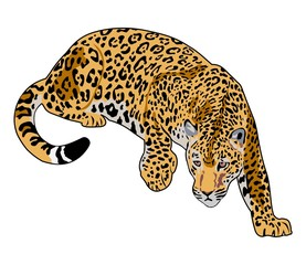 illustration of jaguar