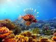 Fototapeten,fisch,tauchen,unterwasser,riff