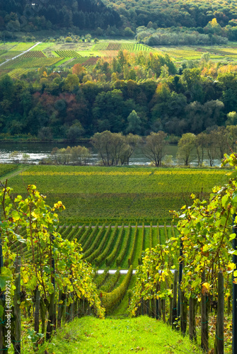 vineyards and forest