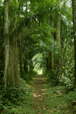 Fototapety walking path in the tropical forest wide shot