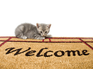 Kitten and welcome mat