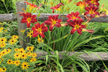 Rustic Fence with Flowers